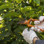 5 benefícios de contratar profissionais especialistas em manutenção de áreas externas para sua empresa
